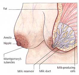 Do Breasts Always Hurt In Early Pregnancy